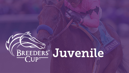 Breeders Cup Handicapping Headquarters Xpressbet